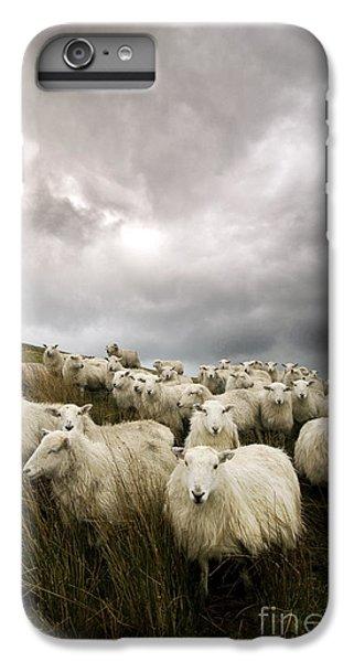 Sheep iPhone 8 Plus Case - Welsh Lamb by Angel Ciesniarska