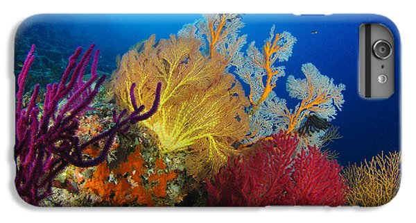Scuba Diving iPhone 8 Plus Case - A Diver Looks On At A Colorful Reef by Steve Jones