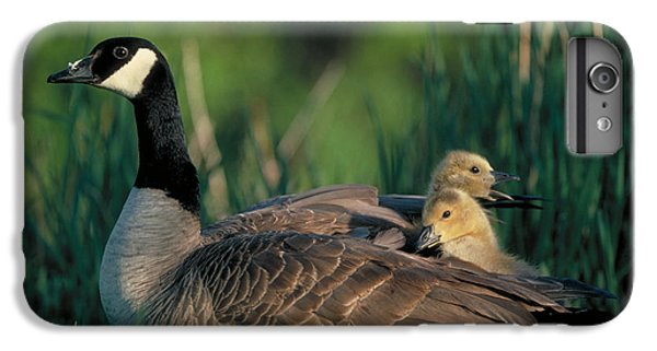 Gosling iPhone 8 Plus Case - Canada Goose With Goslings by Alan and Sandy Carey and Photo Researchers