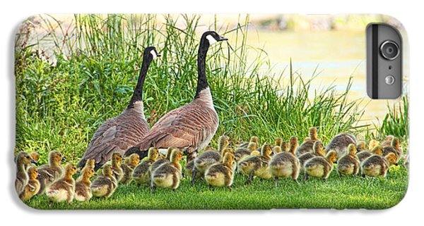 Gosling iPhone 8 Plus Case - Canadian Geese Family by Jennie Marie Schell