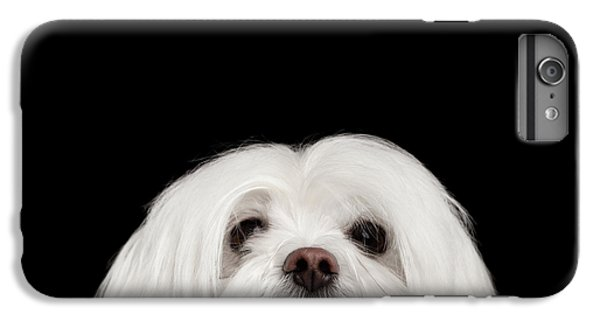 Dog iPhone 8 Plus Case - Closeup Nosey White Maltese Dog Looking In Camera Isolated On Black Background by Sergey Taran