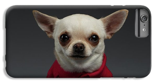 Dog iPhone 8 Plus Case - Closeup Portrait Chihuahua Dog In Stylish Clothes. Gray Background by Sergey Taran
