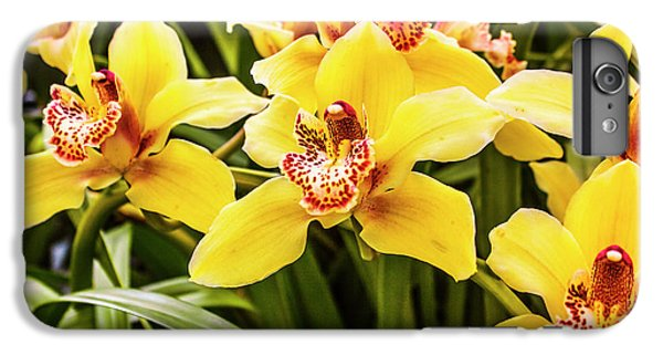 Shrub iPhone 8 Plus Case - Exotic Orchids  by Jorgo Photography - Wall Art Gallery