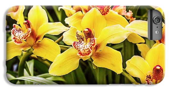 Orchid iPhone 8 Plus Case - Exotic Orchids  by Jorgo Photography - Wall Art Gallery