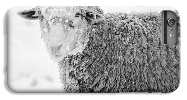 Sheep iPhone 8 Plus Case - Frozen Dinner by Mike  Dawson