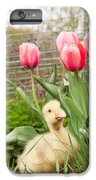 Gosling iPhone 8 Plus Case - Gosling In Tulip Garden by Elizabeth Gray