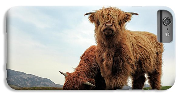 Bull iPhone 8 Plus Case - Highland Cow Calves by Grant Glendinning