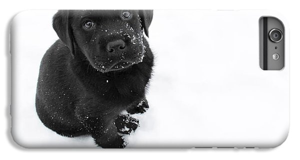Dog iPhone 8 Plus Case - Puppy In The Snow by Larry Marshall