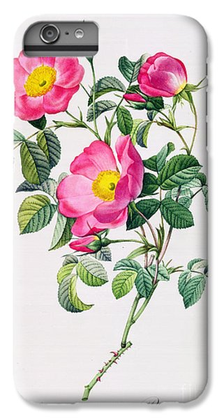 Rose iPhone 8 Plus Case - Rosa Lumila by Pierre Joseph Redoute