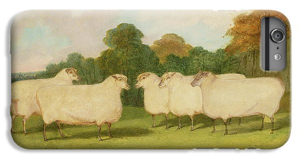 Sheep iPhone 8 Plus Case - Study Of Sheep In A Landscape   by Richard Whitford