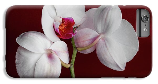 Orchid iPhone 8 Plus Case - Trio Of Orchids by Tom Mc Nemar
