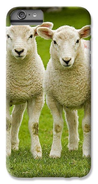 Sheep iPhone 8 Plus Case - Twin Lambs by Meirion Matthias