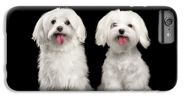 Dog iPhone 8 Plus Case - Two Happy White Maltese Dogs Sitting, Looking In Camera Isolated by Sergey Taran