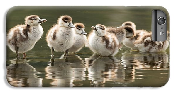 Gosling iPhone 8 Plus Case - We Are Family - Seven Egytean Goslings In A Row by Roeselien Raimond