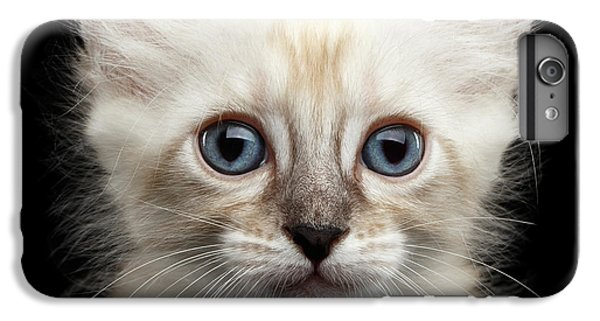 Cat iPhone 8 Plus Case - Mekong Bobtail Kitty With Blue Eyes On Isolated Black Background by Sergey Taran