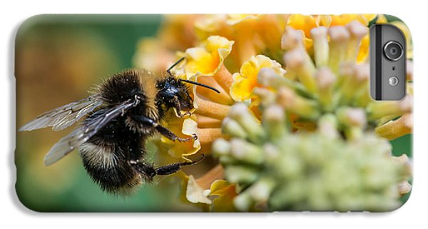 Shrub iPhone 8 Plus Case - A Macro Shot Of A Bumblebee Enjoying by Ian Grainger