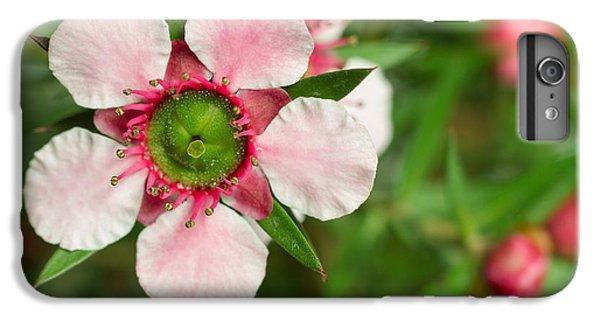Shrub iPhone 8 Plus Case - Close-up Of A Pink Manuka Leptospermum by Srekap