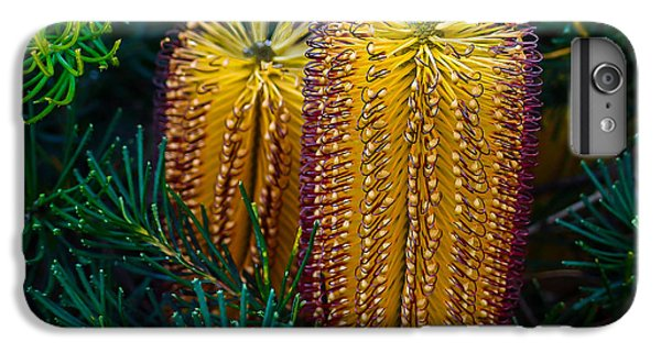 Shrub iPhone 8 Plus Case - Native Banksia Flower by Lily Zdilar