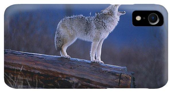 Winter iPhone XR Case - Coyote Standing On Log Alaska Wildlife by Doug Lindstrand