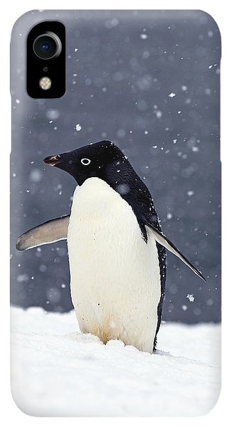Winter iPhone XR Case - Adelie Penguin Standing In Fresh by Steven Kazlowski