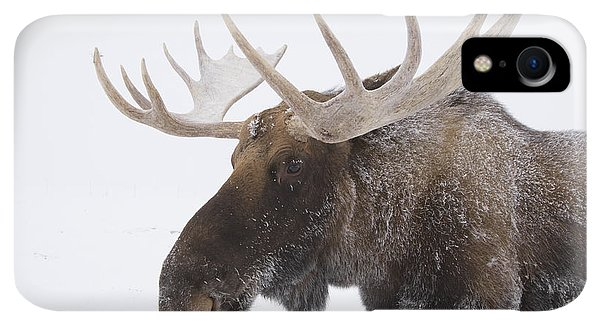 Winter iPhone XR Case - An Elk Cervus Canadensis With Snow by Doug Lindstrand