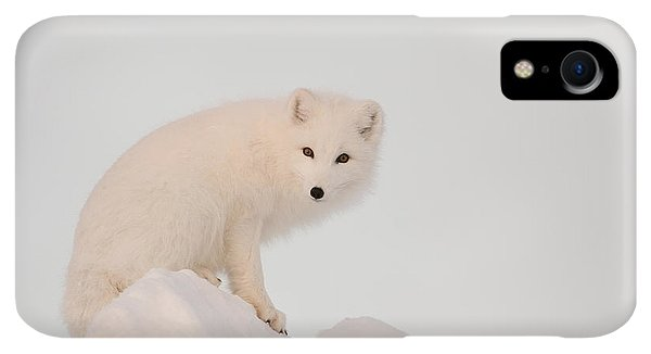 Winter iPhone XR Case - Arctic Fox Stands In Late Afternoon Sun by Tom Soucek