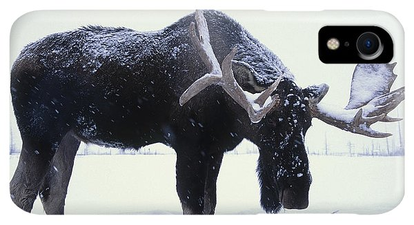 Winter iPhone XR Case - Captive Bull Moose Foraging For Food by Doug Lindstrand