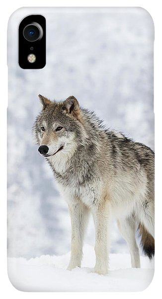 Winter iPhone XR Case - Captive  Female Tundra Wolf In Snow by Doug Lindstrand