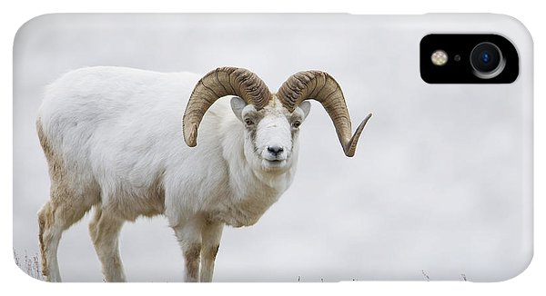 Winter iPhone XR Case - Dall Sheep Ram On Sheep Mountain by Milo Burcham