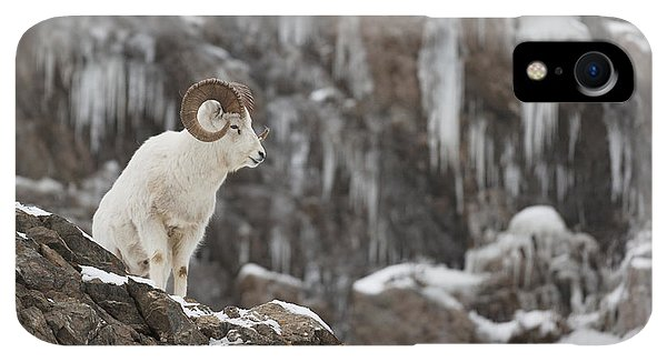 Winter iPhone XR Case - Dall Sheep Ram Stands On A Rocky Cliff by Doug Lindstrand