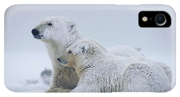 Winter iPhone XR Case - Female Polar Bear Resting With Her Two by Steven Kazlowski
