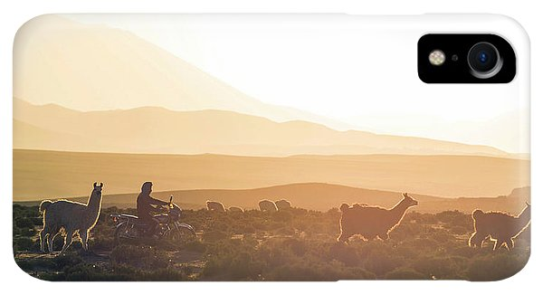 Scenic iPhone XR Case - Herd Of Llamas Lama Glama In A Desert by Panoramic Images