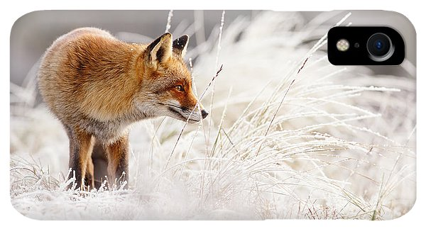 Winter iPhone XR Case - Red Fox And Hoar Frost _ The Catcher In The Rime by Roeselien Raimond