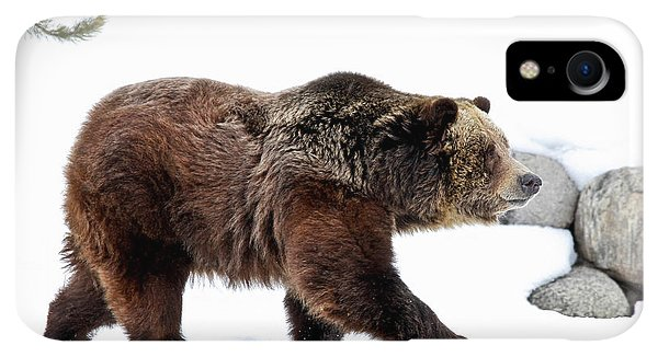 Winter iPhone XR Case - Winter Bear Walk by Athena Mckinzie