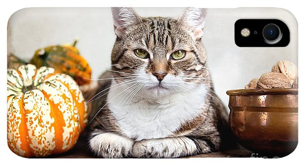 Kettles iPhone XR Case - Cat And Pumpkins by Nailia Schwarz