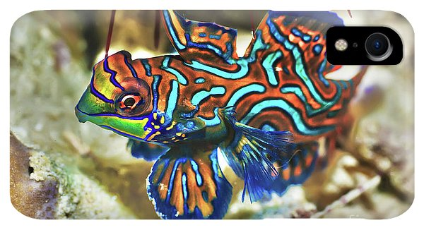 Scuba Diving iPhone XR Case - Tropical Fish Mandarinfish by MotHaiBaPhoto Prints