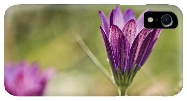 Violet iPhone XR Case - Flower On Summer Meadow by Nailia Schwarz