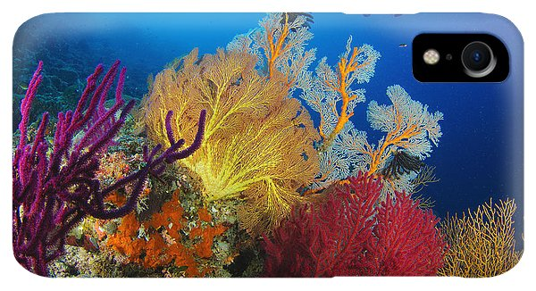 Scuba Diving iPhone XR Case - A Diver Looks On At A Colorful Reef by Steve Jones