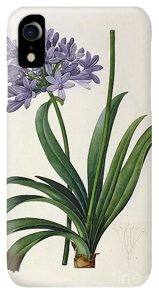 Violet iPhone XR Case - Agapanthus Umbrellatus by Pierre Redoute