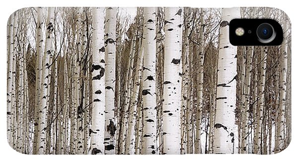Rocky Mountain iPhone XR Case - Aspens In Winter Panorama - Colorado by Brian Harig