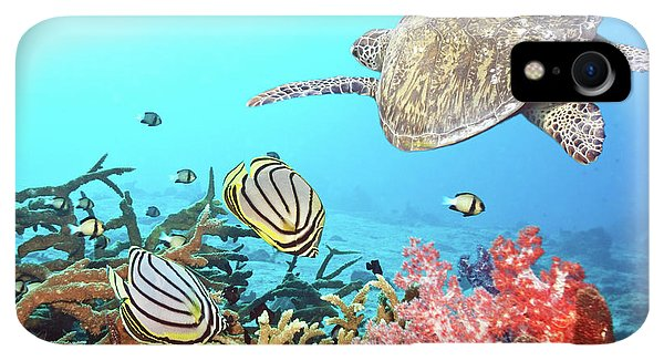 Scuba Diving iPhone XR Case - Butterflyfishes And Turtle by MotHaiBaPhoto Prints