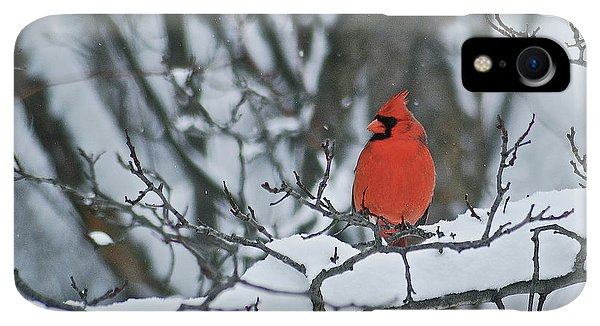 Winter iPhone XR Case - Cardinal And Snow by Michael Peychich