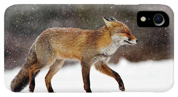 Winter iPhone XR Case - Cold As Ice - Red Fox In A Snow Blizzard by Roeselien Raimond