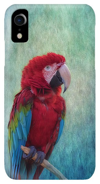 Scarlet iPhone XR Case - Feathered Friend by Kim Hojnacki