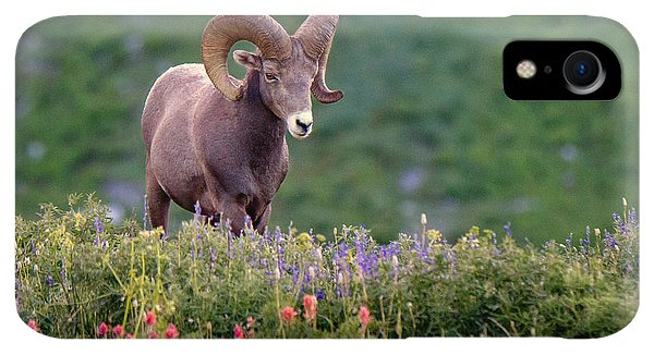 Rocky Mountain iPhone XR Case - Wild Journey by Ryan Smith