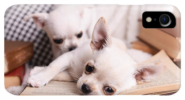 Small iPhone XR Case - Adorable Chihuahua Dogs With Books On by Africa Studio