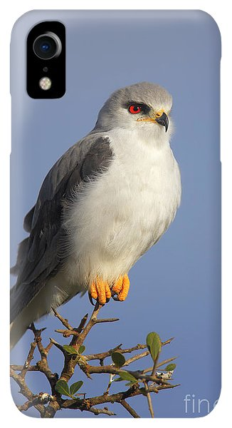 Small iPhone XR Case - Black-shouldered Kite - Elanus Caeruleus by Johan Swanepoel