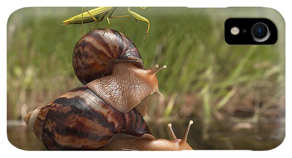 Small iPhone XR Case - Closeup Praying Mantis Riding On Snails by Torook