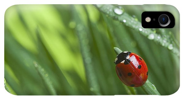 Small iPhone XR Case - Ladybird On Grass by Didecs