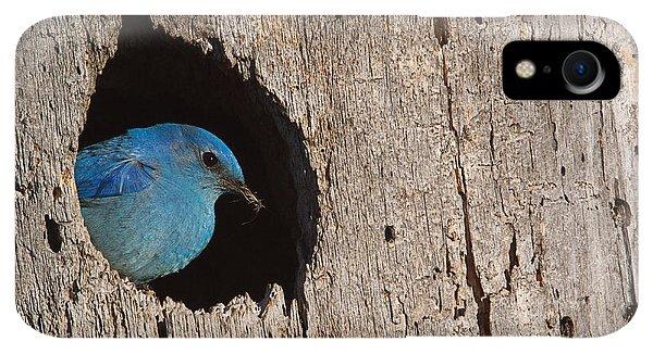 Rocky Mountain iPhone XR Case - Mountain Bluebird, Sialia Currucoides by Tom Reichner